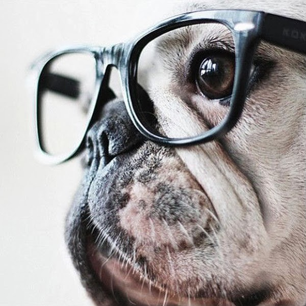 Hipster-pup-l